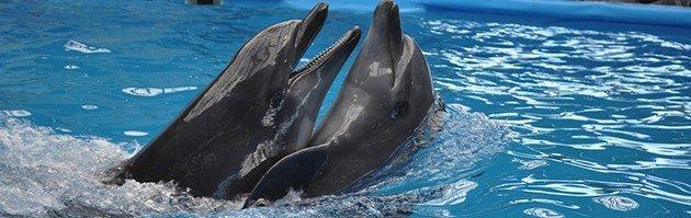 """performer Kiev Dolphinarium """"Nemo"""""""